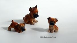 Rashond, Boxer set met 2 pups 4,5 x 4,5