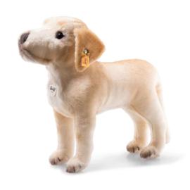 083471  Steiff Hond 32 cm Labrador