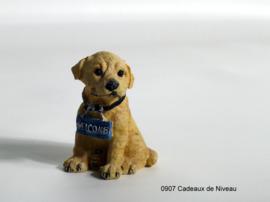 Rashondjes, pup