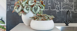 Pottery Pots Ridged Collectie