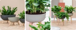 Plantenbakken op pootjes