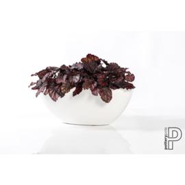 Pottery Pots Fiberstone  Dorant XS