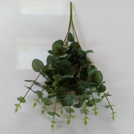 Bob Eucalyptus boomerang fruits ( kunstplant/Deco)