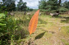 Tuinsteker roestijzer wonderblad