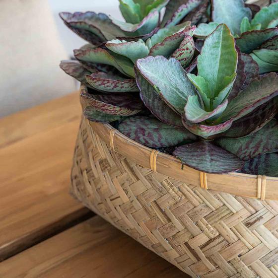 Pottery Pots Bohemian Nala Low L