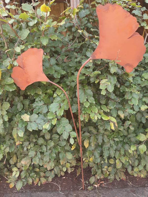 Tuinsteker  2 Ginko's op steel roestijzer