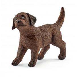 labrador pup 13835