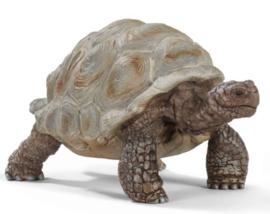 tortue géante 14824