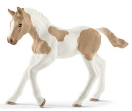 paint horse poulain 13886