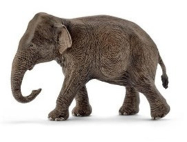 Aziatische olifant koe 14753