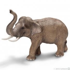 Aziatische olifant stier 14653 zzz