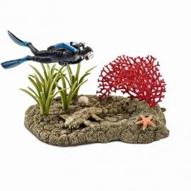 duiker in koraalrif 42328 -