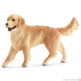 golden retriever 16395 -