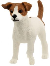 Jack Russel Terrier 13916