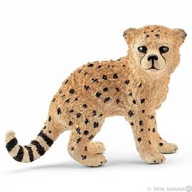 cheetah pup 14747