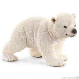 ijsbeer jong 14708 -