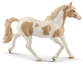 paint horse jument 13884