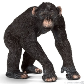 chimpansee man 14678 *