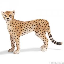 cheetah wijfje 14614 zzz
