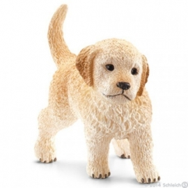 golden retriever pup 16396 -