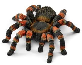 vogelspin tarantula 14829