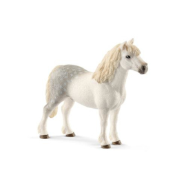 Welsh pony hengst 13871 18