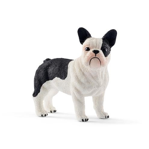 Franse bulldog 13877 18
