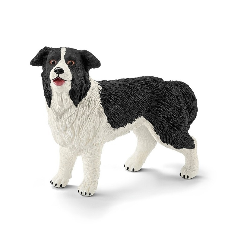 border collie 16840 -