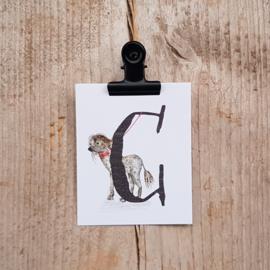 C van Chinese gekuifde naakthond - Letterkaartje