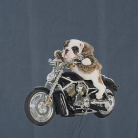 Paneel Stenzo / motorfietsen