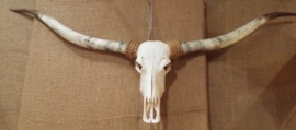 Originele longhorn schedel