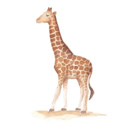 Muursticker Kinderkamer Giraf
