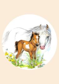 Poster Kinderkamer Veulen met Paard A3