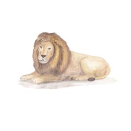 Muursticker Kinderkamer Grote Leeuw