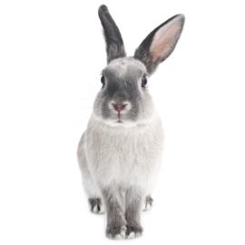Muursticker Kinderkamer Harry The Rabbit