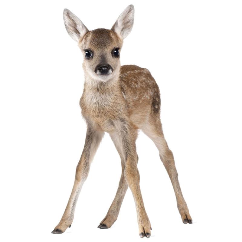 Muursticker Kinderkamer Deer Lucy