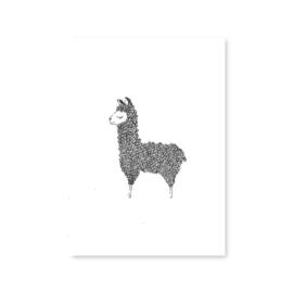 Ansichtkaart Lama - Alpaca