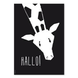 Poster Giraffe Hallo A4