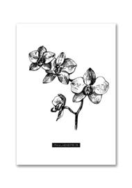 Woonkaart botanisch Phalaenopsis A5