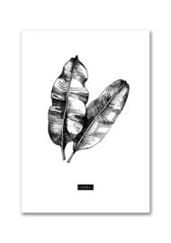 Woonkaart botanisch Musa A5