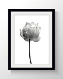 Poster Foto Lotus A4