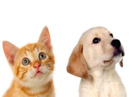 Foto kaart Hond en Poes met witte achtergrond