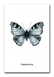Poster Vlinder A4