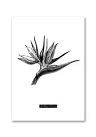Woonkaart botanisch Strelitzia A5