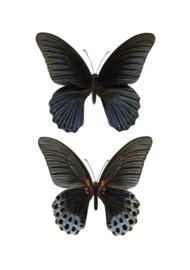 Foto kaart Vlinders