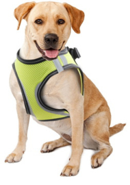 Doggy Safety Harness