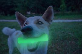2 Glow Cracking & tracking stick
