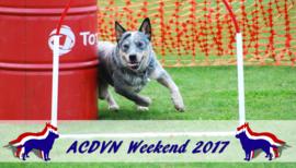 Australian Cattle Dog Weekend, camping De Parel, Zeewolde (9, 10 & 11 juni 2017)