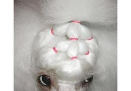 Show Tech Medium (8mm) latex Top Knot elastiekjes voor honden (1000 stuks) roze