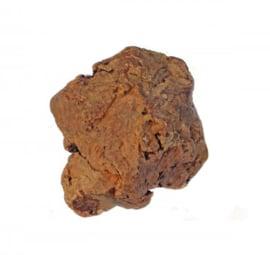 Olijfboom Kauwwortel M